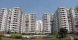 Calcutta Greens-1